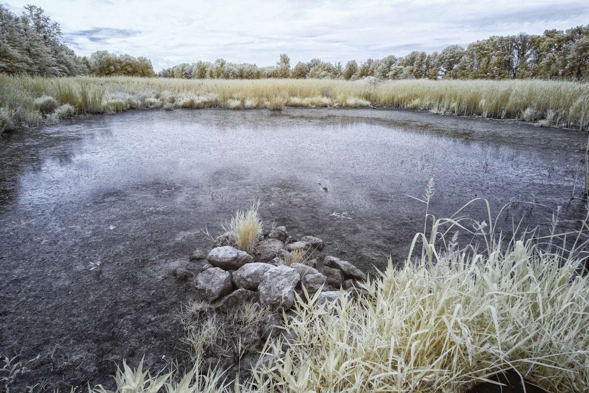 Pond at Sandy Ridge in North Ridgeville, OH in Infrared