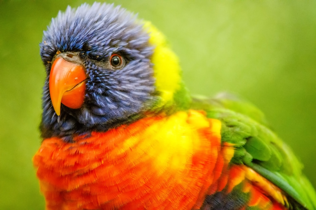 Parrot Pet Portraits by Jason Tyson Photography