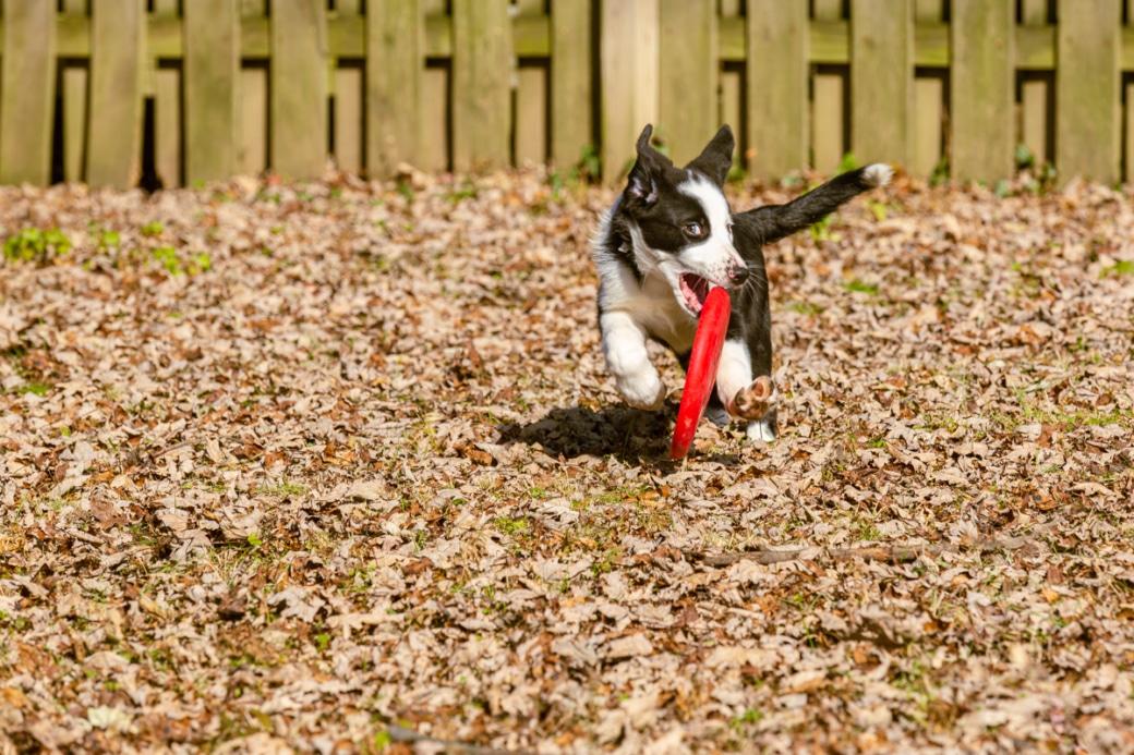 Pet Photography by Jason Tyson Photography